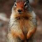 Richardson's ground squirrel by CBoyle