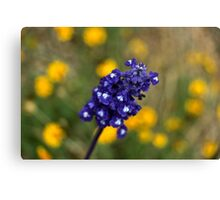 Violet Dreams Canvas Print