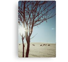 Tree and Cows Canvas Print