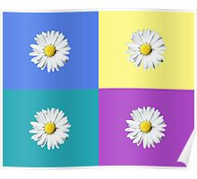 Daisy squares Poster