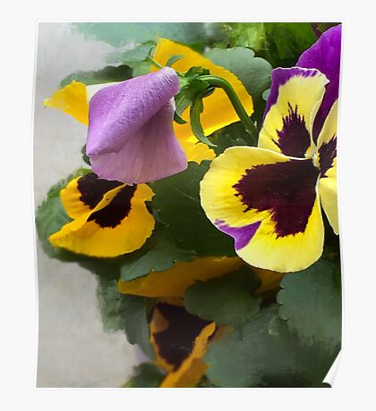 Celebration Pansies Poster