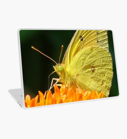 Cloudless Sulphur On Butterfly Weed Laptop Skin