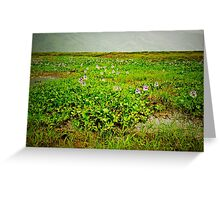 A Field of Pokhara Dreams Greeting Card