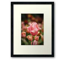 Tulips at Eden Framed Print