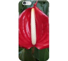Anthurium Beauty iPhone Case/Skin