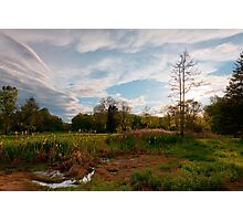 Backyard Kingdom Photographic Print