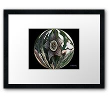 FIVE-POINT STAR SUCCULENT IN BUBBLE Framed Print