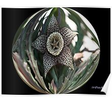 FIVE-POINT STAR SUCCULENT IN BUBBLE Poster