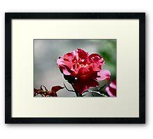 Cinco De Mayo Rose Framed Print