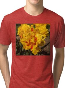 Showy Sunny Yellow Tulips Tri-blend T-Shirt