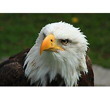 American Bald Eagle Photographic Print