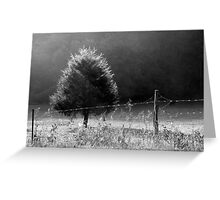 Morning Fog O'er Cow Pasture Greeting Card