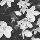Wildflowers Black and White by angelandspot
