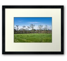 A day in spring Framed Print