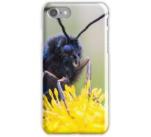 A Burnet moth rests on a yellow flower. iPhone Case/Skin