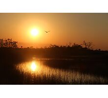 Bird flying over Marshes at Sunset Photographic Print