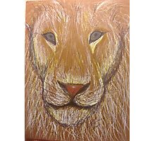 Lion in Colored Pencil Photographic Print