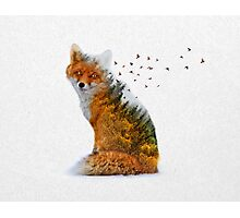 Wild I Shall Stay | Fox Photographic Print