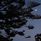 Moonlight Pine by KMorral