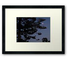 Moonlight Pine Framed Print