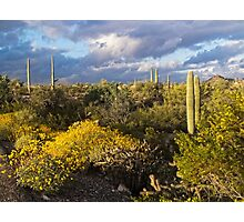 Setting Sun at Organ Pipe Cactus National Monument Photographic Print