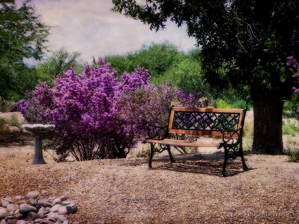 The Bench by Lucinda Walter