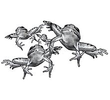 Leaping Frogs, Original Pencil Drawing Photographic Print