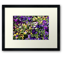 Cheerful Pansies Framed Print