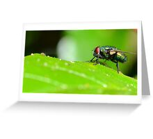 Armour Clad Fly Greeting Card