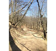 """"""" Titled Trees"""" in Saugatuck, Michigan Photographic Print"""