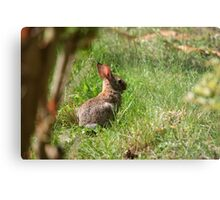 Some-bunny's looking for Beatrix Potter! Metal Print