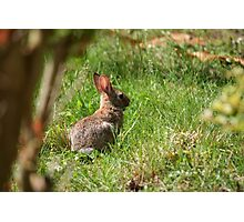 Some-bunny's looking for Beatrix Potter! Photographic Print