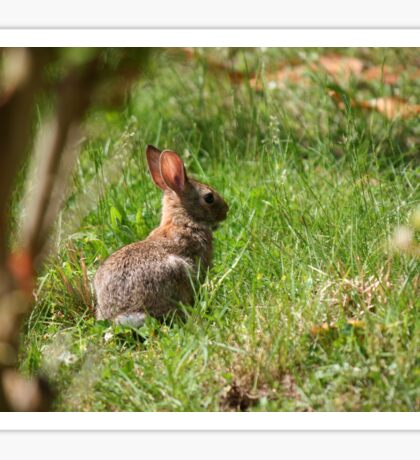 Some-bunny's looking for Beatrix Potter! Sticker