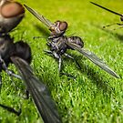 Revenge of the Flies by Randy Turnbow