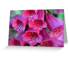 Sun-Kissed Foxglove, Wickedly Wonderful and Seductive Greeting Card