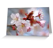 Sargent's Cherry Blossoms Greeting Card