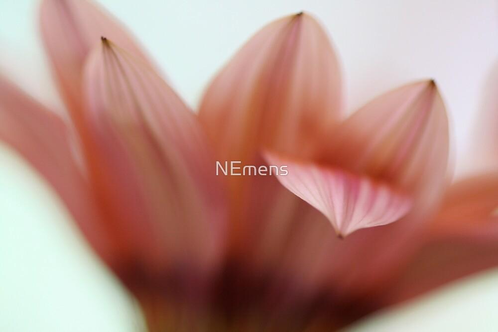 delicate by NEmens