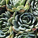 World Of The Succulent by Joy Watson