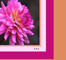Dahlia Think Pink by Joy Watson