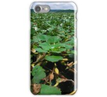 Blanket of Water Chestnuts in the Hudson River iPhone Case/Skin