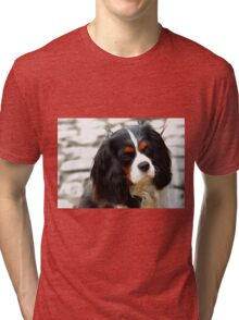 Portrait Of A King Charles Cavalier Spaniel Tri-blend T-Shirt
