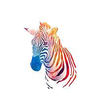 cebra colours Photographic Print