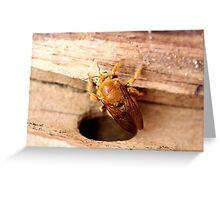 Golden Carpenter Bee Greeting Card