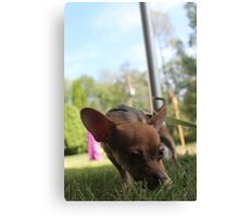 Small Dog Big World Canvas Print
