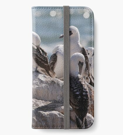 peruvian booby iPhone Wallet/Case/Skin