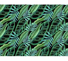 cool green  Photographic Print