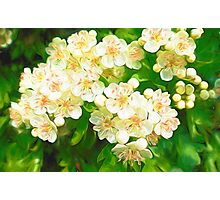 Bridal Wreath ( Abstract Painting ) Photographic Print