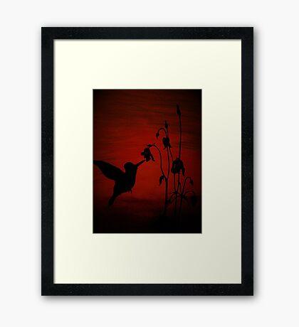 Daddy's Hummingbird Framed Print