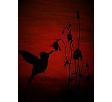 Daddy's Hummingbird Photographic Print