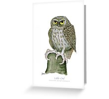 Little Owl, tony fernandes Greeting Card
